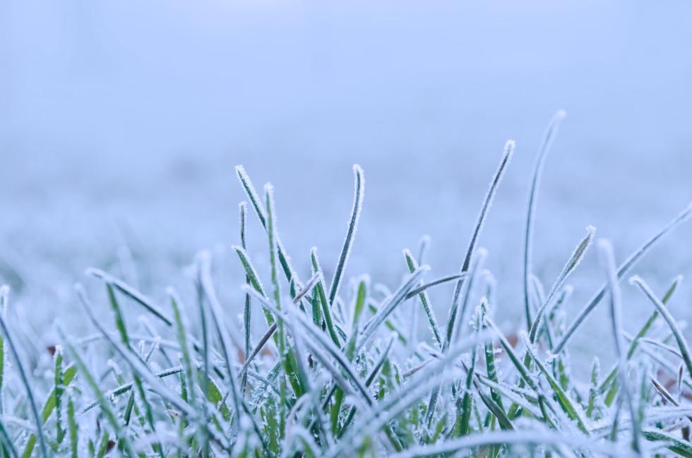 frozen_grass_211777